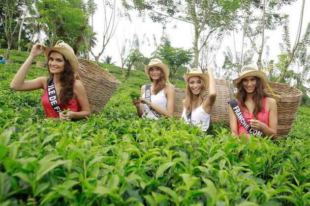 Une pause-thé pour les miss en visite au Sri Lanka