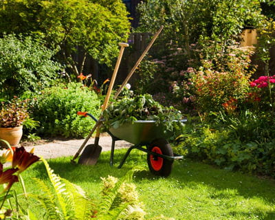 Le calendrier du jardinier pour juillet et ao t for Jardins de jardiniers