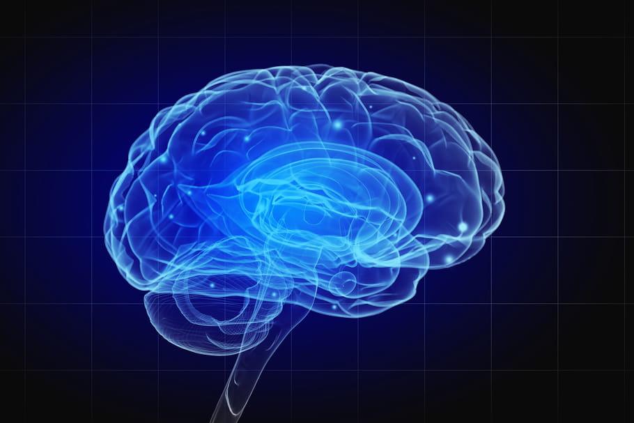 Cerveau: anatomie, rôle, schéma, maladies, examens