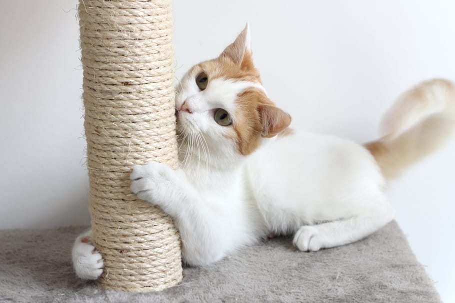 b07abeb7ff2e Meilleur griffoir pour chat   le bon modèle pour votre animal