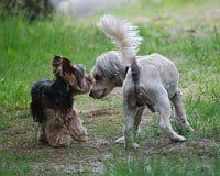 vous saurez immédiatement si votre chien s'entendra avec celui de ses hôtes