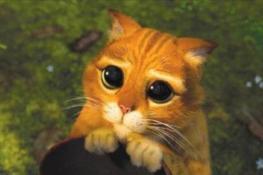 Journée internationale du chat : les matous, tous des enfoirés ?