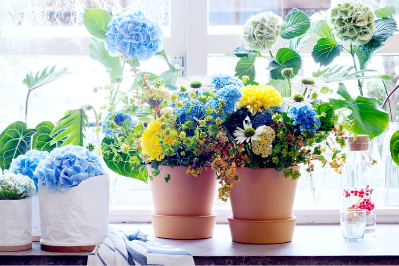 Hortensia: 5compositions florales pour le mettre en valeur