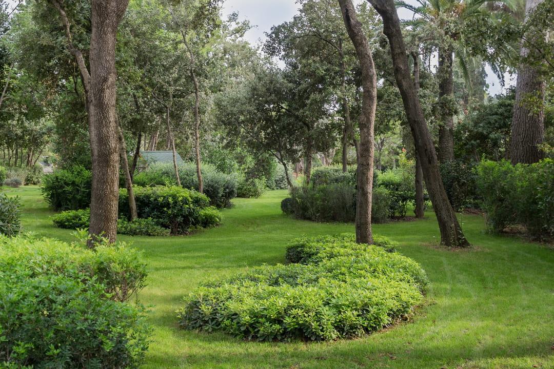jardin-en-longueur-avec-courbes